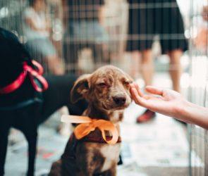 hond adopteren buitenland